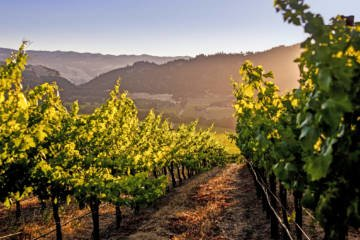 LuxeGetaways - Luxury Travel - Luxury Travel Magazine - Luxe Getaways - Luxury Lifestyle - California Wine Month - September 2017 - Wine Lovers - Wine Events - Wineries at sunrise