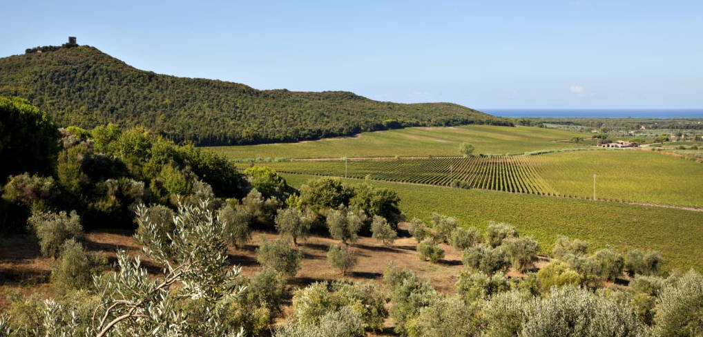 LuxeGetaways - Luxury Travel - Luxury Travel Magazine - Luxe Getaways - Luxury Lifestyle - Italy Feature - Tuscany - Tuscan Wines - Winery