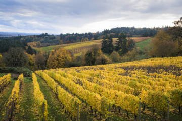 LuxeGetaways - Luxury Travel - Luxury Travel Magazine - Luxe Getaways - Luxury Lifestyle - Bespoke Travel - Willamette Valley Oregon - Wine Getaway